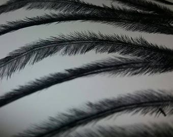 Ostrich feathers herl Black x30 millinery, decorations, natural
