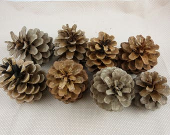 """Set of pinecones """"nature"""" for home decoration"""