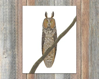 Long-eared Owl Bird Print