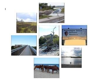 Canvas Photo Collage - Assateague Island, Maryland