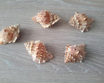 real shells for all DIY
