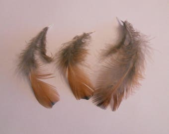 Set of 3 natural pheasant feathers 11 to 13 cm