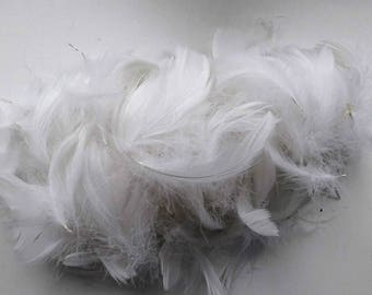 set of 10 white 5-10cm feathers