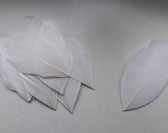 set of 10 8-10cm white feathers