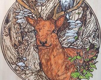 Deer in forest burned at lime wood
