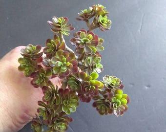 Burgundy sedum pic artificial succulent. Silk flower arrangements