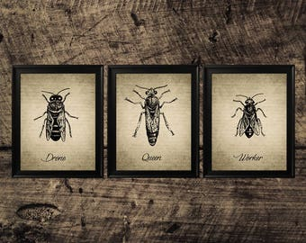 Bees Vintage print, vintage bee art, room decor, bees wall decor, bees instant download