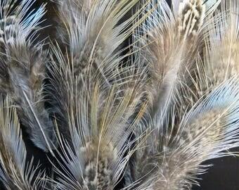 Plumes de croupe de faisan à collier irisé