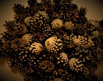 20 pieces Pine cones/Natural pine cones/Dried pine cones/Material for Floristry/Requisite for Photographic Art/Decorative element.