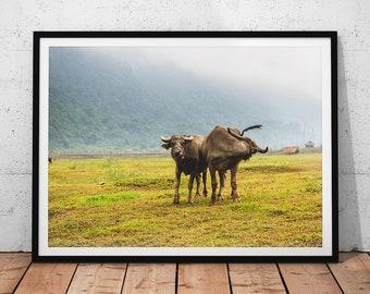 Asian Water Buffalo Photo // Vietnam Wildlife Photography Print, Nature Wall Art, Cute Animal Home Decor, Farm Landscape, Endangered Animal