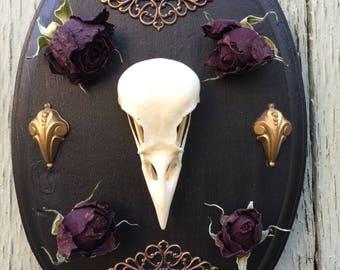 English magpie bird skull taxidermy gothic decor wall art