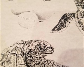Turtle Print/turtle picture/turtle artwork/turtle drawing/baby turtles