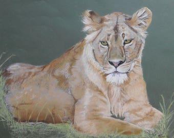 Resting Lioness, print of my original pastel painting