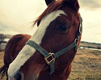 Calm Horse - Digital Download