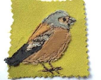 Velvet chaffinch
