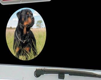Loyal Rottweiler in a Field Black 'n Tan