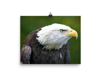 American Bald Eagle Poster on Photo Paper