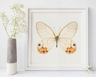 Butterfly Art, Insect Art, Wall Art Print, Butterfly Print, Orange, Nature Photography, Glasswing Butterfly, Large Wall Art, Insect Print