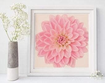 Pink Flower Photography Print, Dahlia Flower Wall Art, Floral Wall Art, Large Art Print, Minimalist, Nature Photography