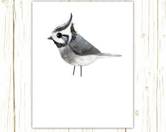 Bridled Titmouse Print -- bird art -- colorful bird art by stephanie fizer coleman illustration