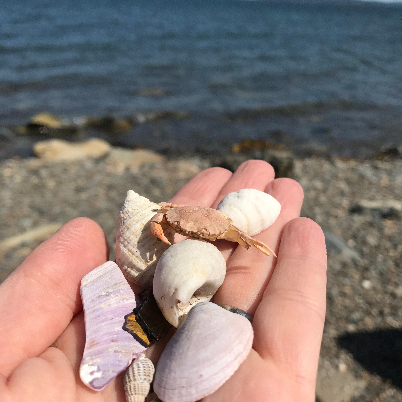 beach combing digby nova scotia