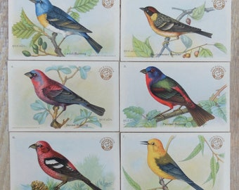 Vintage Bird Ephemera Trading Cards Birds