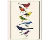 Natural Values print - Camaraderie - Bird Art - Rainbow - Nature Art - Inspirational - Ryan Berkley - Illustration - Wall Art - Diversity