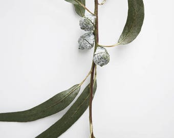 "Minimal nature wall art sage olive green white botanical print ""Eucalyptus Sprig Five"""