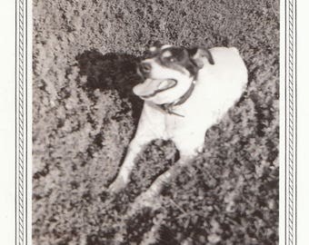 Original Vintage Bordered Photograph Snapshot Sweet Dog 1930s-40s