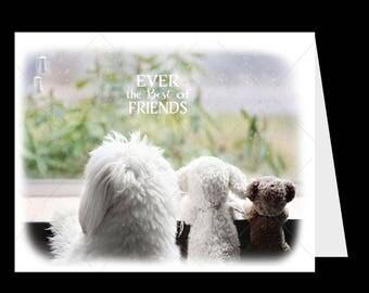 Dog, Dog Card-Best Friend Greeting Card