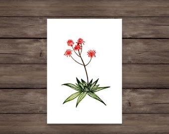 Red Succulent Giclee print