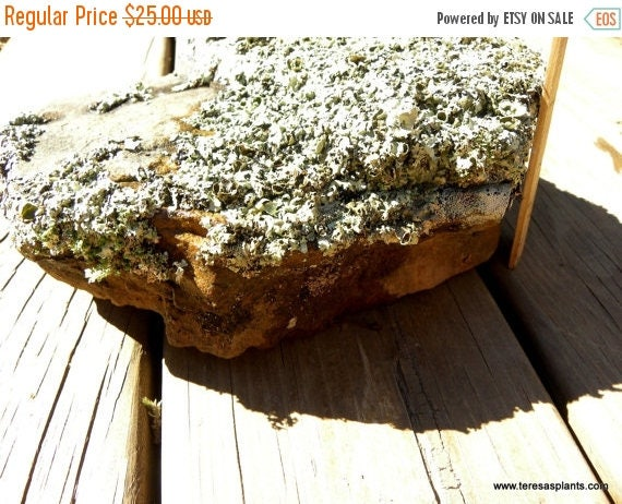 Save 15% lichen covered rock - Real forest lichens-Garden stones-Large rock with assorted lichens-Always one of a kind