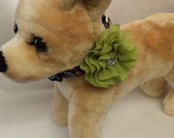 Fun Folklore Collar With Flower Attachment Size XS through Large by Doogie Couture Pet Boutique