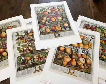 Robert Furber twelve mobths of fruit prints
