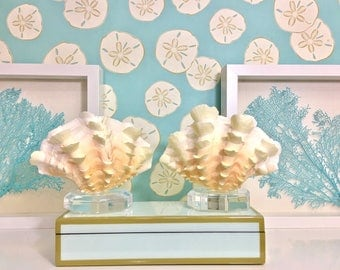 Seashell - Squamosa Shell mounted on Lucite Stand -  beach decor/coastal decor
