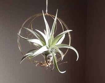 Moon Air Plant Nest, Hanger, Hanging Airplant Holder, Celestial Boho Decor, Display, House Warming, Hostess Gardening Gift, Wall Planter