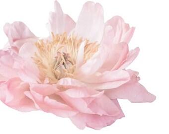 Light Pink Peony Garden Flower - Vinyl Decal Wall Décor