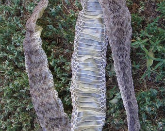 "Cruelty Free • No. 100 62"" Inch HUGE Western Diamondback Rattlesnake Rattler Skin Shed | Venomous Hot Reptile Serpent  | Taxidermy Specimen"