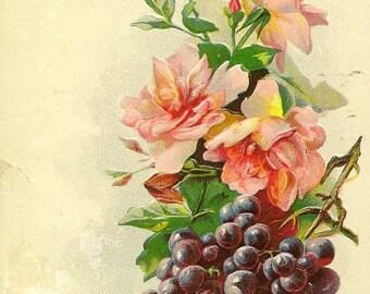 Embossed Floral Vintage Postcard Pink Roses and Purple Grape Cluster - Lovely Art Postcard 1910