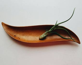 Carved Monkeypod Catch All Tray - Wood Air Plant Holder Wooden Plate - Minimalist Decor