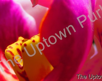 Orchid Close Up Photo Print