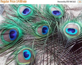 On Sale at Etsy Peacock Feathers, Six  2.5in All Seeing Eye Feathers, and a couple extra feathers, 6ish tot, Weddings, Prom, Center Pieces,