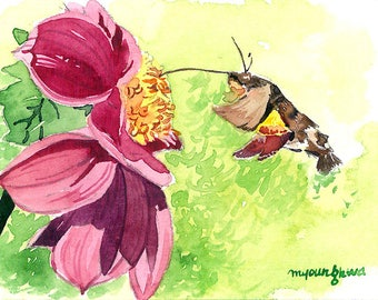 ACEO Limited Edition 2/25 - Buzzing, Humming moth art print of an original ACEO watercolor painted by Anna Lee