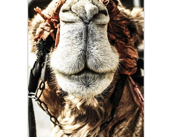 Casual Wall Art 'Camel Grin' by Meirav Levy - Wildlife Decor Modern Camel Artwork on Metal or Plexiglass