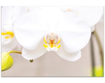 Nature Photography 'White Bloom' by Meirav Levy - Flower Blossom Art Contemporary Nature Decor on Metal or Plexiglass