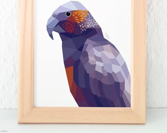 Kaka parrot,  New Zealand kaka, New Zealand birds, parrot illustration, Kea print, Kiwi bird art, New Zealand wildlife art, Geometric parrot