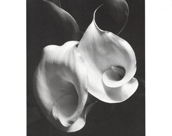 Imogen Cunningham-Two Callas-1997 Poster