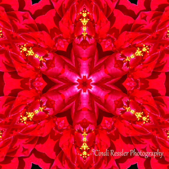 Photography, Peony Kaleidoscope, Photo, Abstract Art, Flower, Floral, Office Decor, Unique Gift, Home Decor, Housewarming Gift, Nature Lover