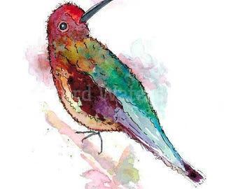 "Little Hummingbird 21cm x 29.5cm "" Print of my original watercolour"