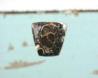 Turritella Agate freeform cabochon 20x20mm